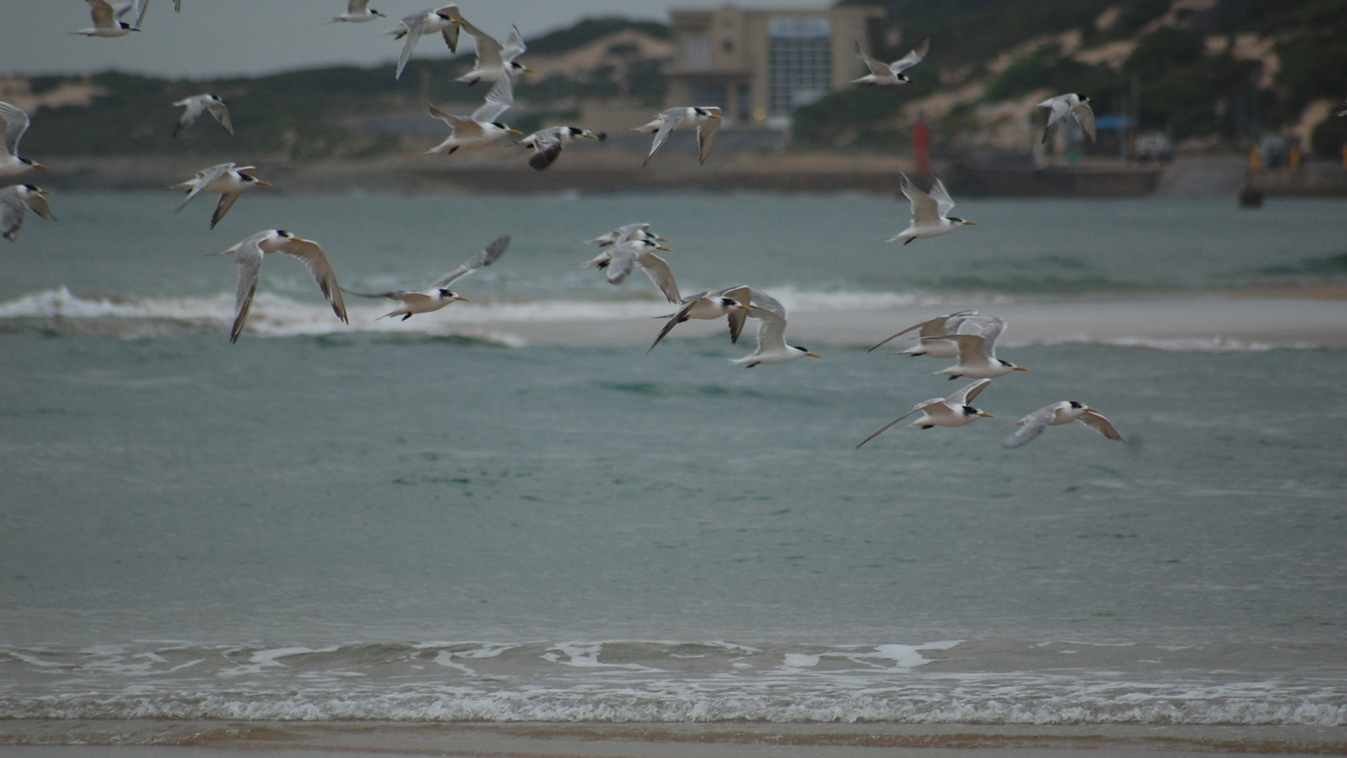 Stilbaai's rich bird life